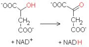 Reacción L-malato-oxalacetato
