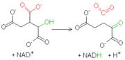 Reacción isocitrato-oxoglutarato