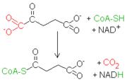 Reacción oxoglutarato-succinil CoA