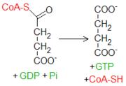 Reacción succinil-CoA-succinato